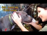 Nala Scared Pit Bull Rescued From A Ditch