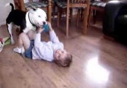 Maddison Loves To Play With Staffordshire Terrier