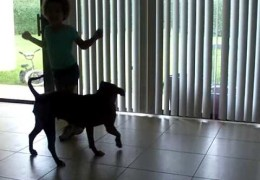 Pit Bull Dances With Five Year Old Girl