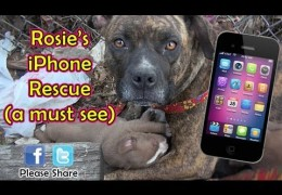 Pit Bull Family Of Five Rescued Using An iPhone