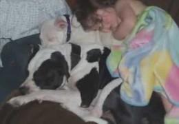Pit Bulls Love Children Unconditionally
