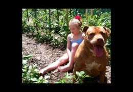 Autistic Child And Pit Bull Are Best Friends