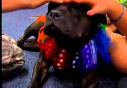 Pit Bulls Bring Loving Joy To Autistic Children