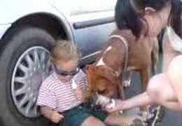 Child And Pit Bull Sharing An Ice Cream
