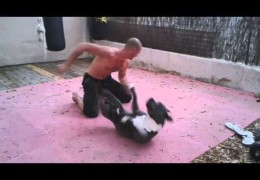 Sparing With Bluenose Pit Bull