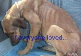 If Everyone Cared More Animals Could Be Saved