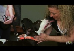 Woman Rescues Pit Bull And Pit Bull Rescues Woman
