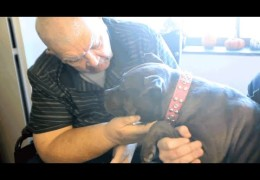 Two Therapy Pit Bulls Visit Sick Patients to Raise Their Spirits