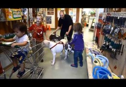 Two Little Kids Playing With Three Pit Bulls In A Pet Store