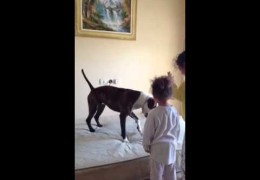 Two Little Girls Teach A Pit Bull How To Jump On a Mattress