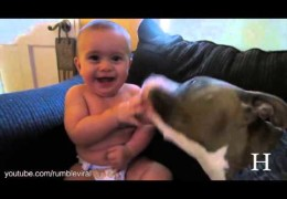 These Pit Bulls Attack With Smooches