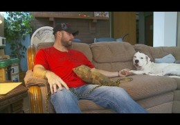 Human-Weary Pit Bull Clicks With Veteran