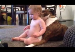 Pit Bull Is Giving A Baby A Bath And She Likes It