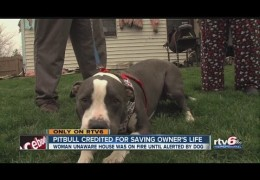 Indianapolis Woman Says Her Pit Bull Saved Her From House Fire