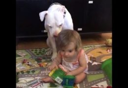 Deaf Girl Uses Her Hands To Talk To Her Pit Bull