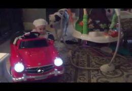 Baby Driving Mercedes Car Exercising Pit bull