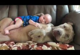Baby Snuggling With Pit bull