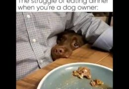 The Struggle Of Eating Dinner When You're A Dog Owner