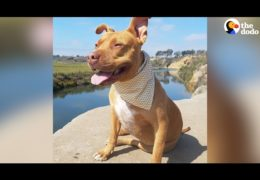 Pit Bull's Mom Fights Against Discrimination