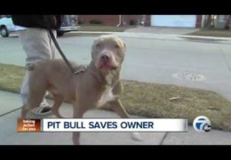 Pit Bull Saves Owner From Diabetic Coma