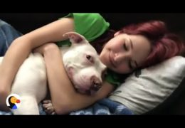 Pit Bull Can't Stop Kissing Human Sister