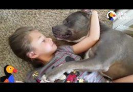Pit Bull Loves Little  Girl So Much
