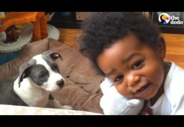 Pit Bull Puppy And Little Boy Grow Up Together