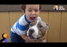 Pit Bull Is Boy's Best Friend And Nanny