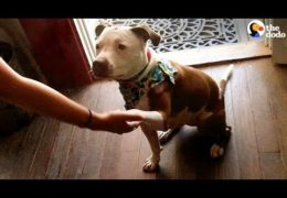 Pit Bull Elected Mayor Of Kentucky Town