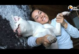 Pit Bull With Broken Legs Has The Best Foster Mom