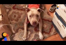 Rescue Pit Bull Helps Mom Find Love And Laughter Again