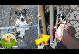 Shelter Pit Bull On Brink Of Euthanasia Asks For Help