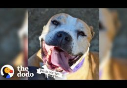 This Senior Rescue Pit Bull Smiles So Much She Sneezes