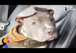 Pit Bull Puppy No One Wanted Is So Thankful His Foster Mom Rescued Him