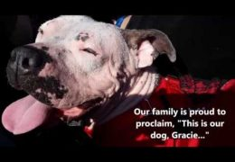 A Story About A Pit Bull Rescue And Foster Failure