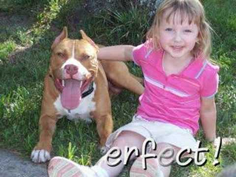 pit bull first two years best pitbull videos cute pit bulls smiling